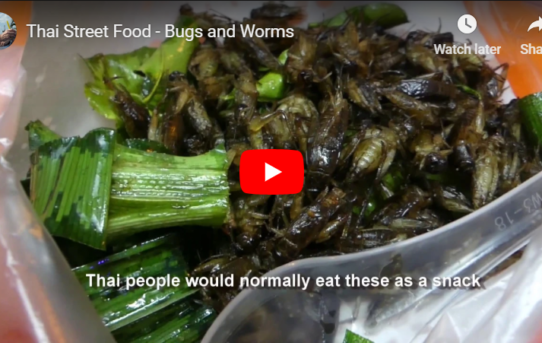 Thai Street Food - Bugs and Worms