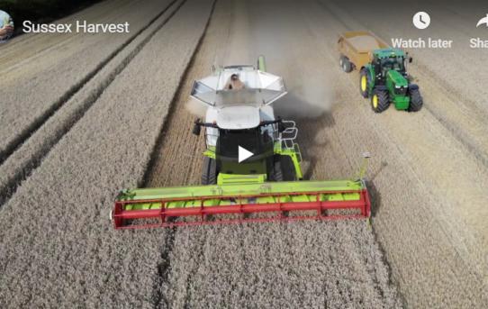 Sussex Harvest
